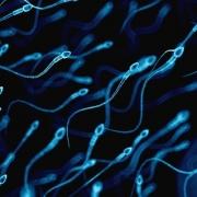 observación de la morfología espermática - Trumorph - PROISER
